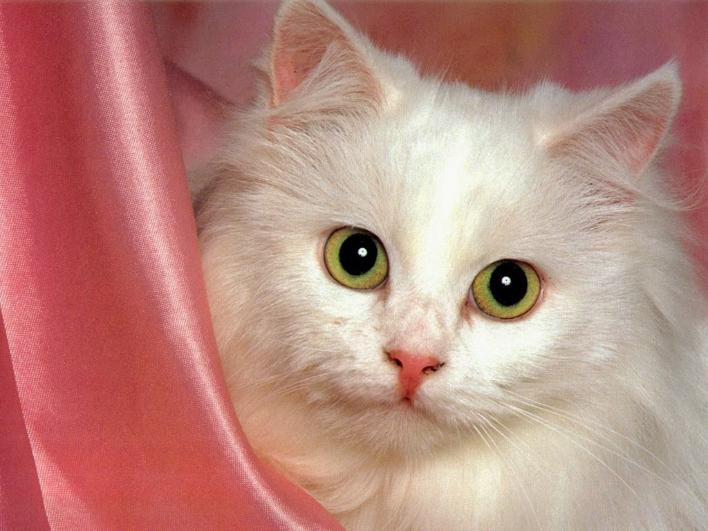 15 Cute Cat and Wallpapers Style Arena