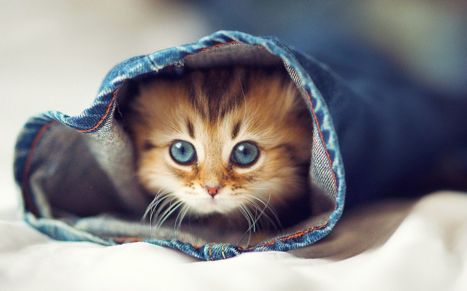 15+ cute cat pictures and wallpapers - style arena