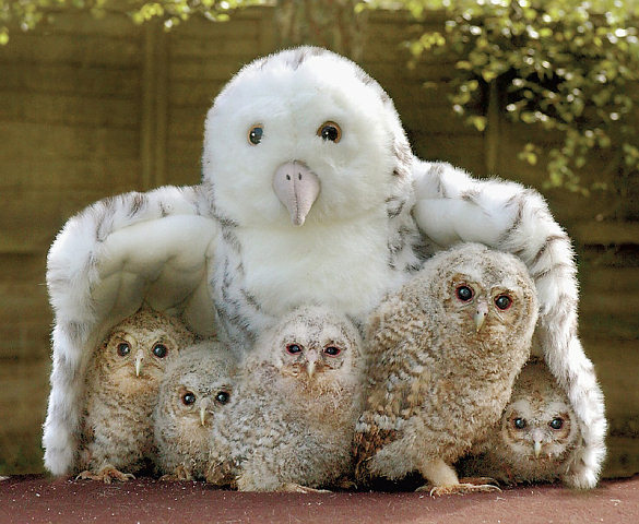 baby animal pictures