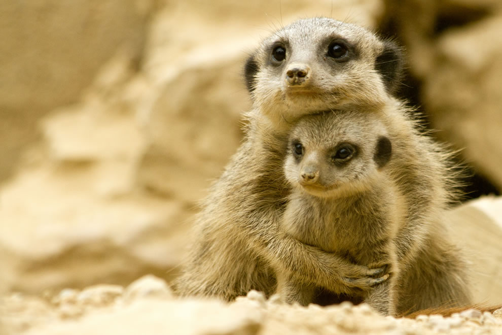 Cute baby animals with their mothers